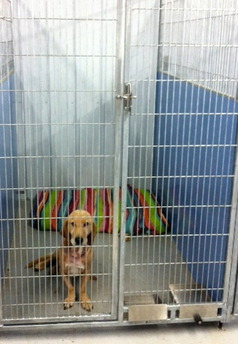 Crawford Area Shelter for Animals, Inc.