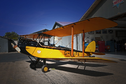 "Yellow Winged "" Tiger Moth"""